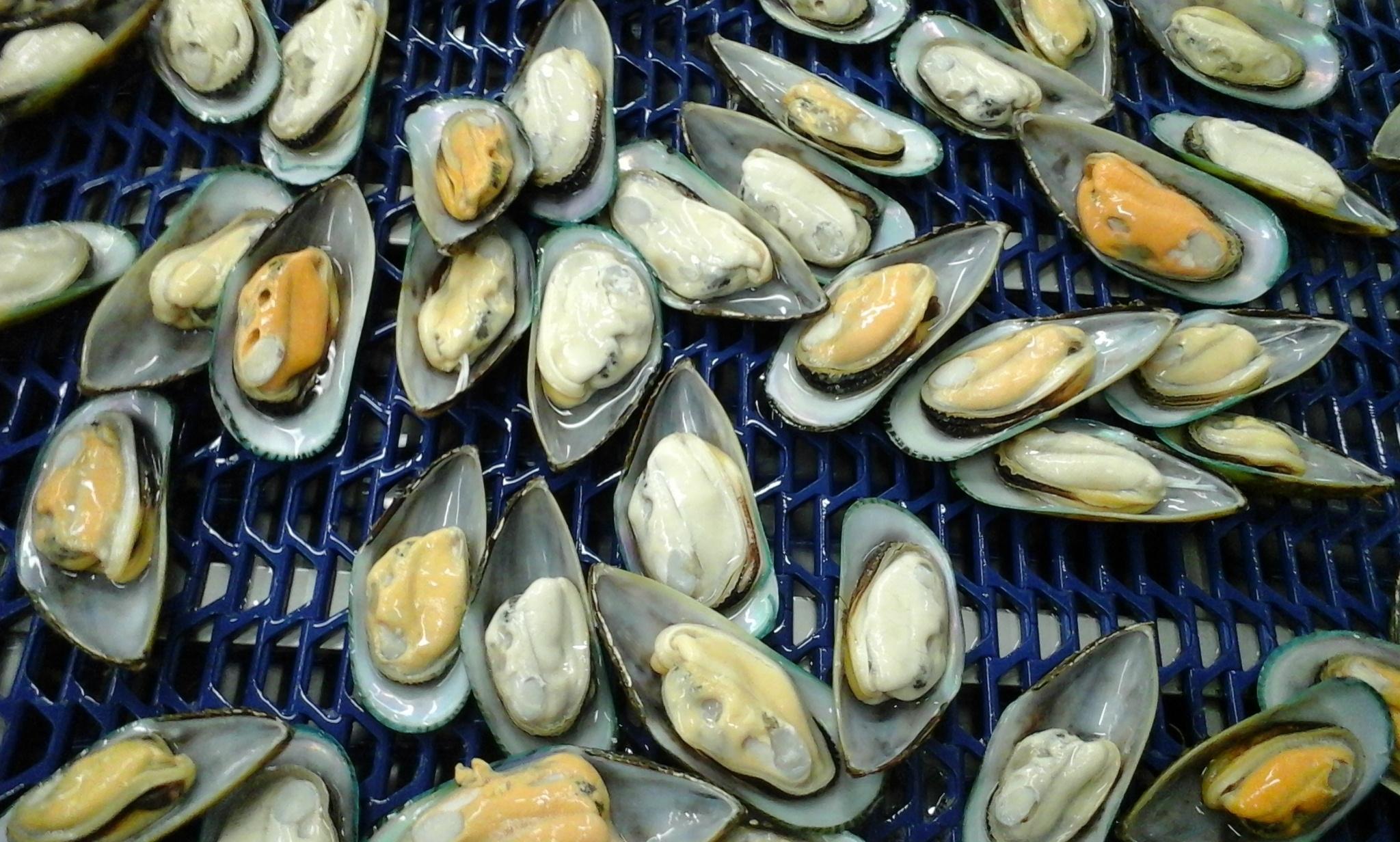 Mussels Half Shell Multiple Unfrozen